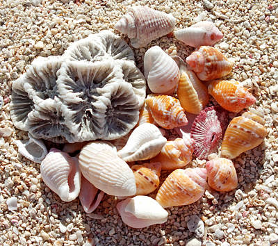 Photograph - Sea Shells Upclose 7 by Duane McCullough