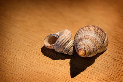 Sea Shells_3 Art Print by Joe Hudspeth