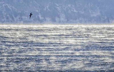 Sea Smoke And Gull Blues Art Print by Marty Saccone