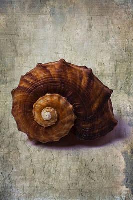 Sea Snail Art Print by Garry Gay
