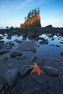 Photograph - Sea Stacks And Star Fish by Byron Jorjorian