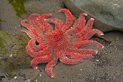 Photograph - Sea Star by Byron Jorjorian