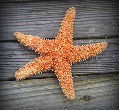 Beach Photograph - Sea Star On Deck 2 by Cathy Lindsey