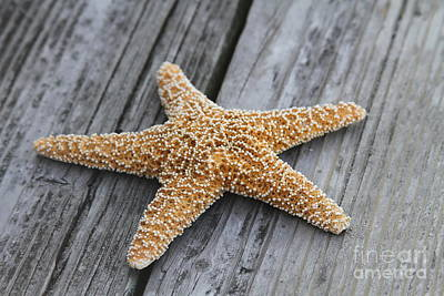Seashells Photograph - Sea Star On Deck by Cathy Lindsey