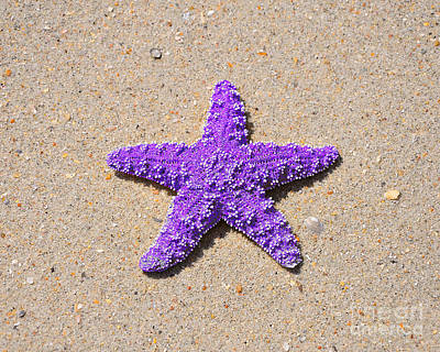 Purple Sea Stars Wall Art - Photograph - Sea Star - Purple by Al Powell Photography USA