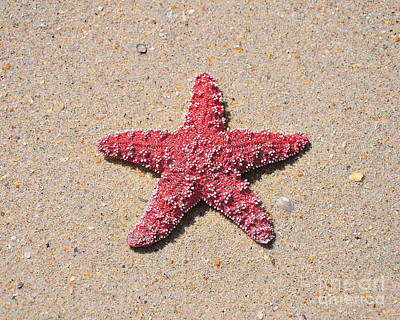 Sea Star - Red Art Print by Al Powell Photography USA