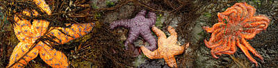 Sea Creatures Photograph - Sea Stars by Panoramic Images
