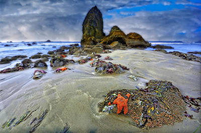 Photograph - Sea Stars by Thomas Born