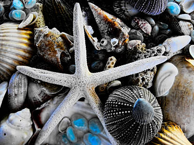 Photograph - Sea Treasure II by Colleen Kammerer