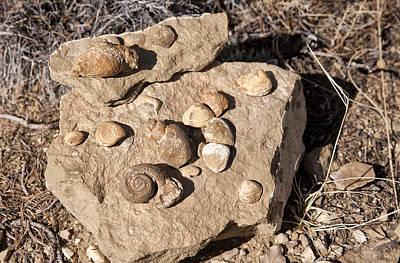Photograph - Sea Treasures - In Albuquerque by Melany Sarafis