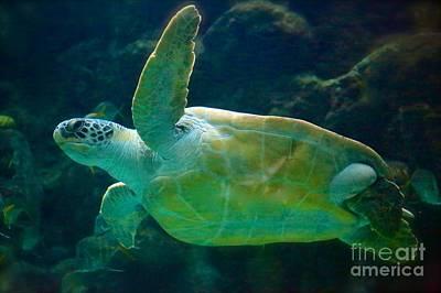 Photograph - Sea Turtle  by Carol Groenen