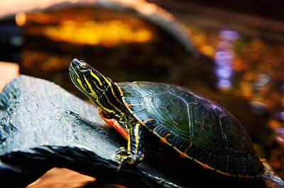 Ocean Turtle Painting - Sea Turtle by Celestial Images