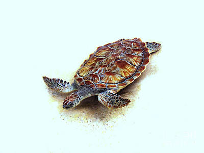 Photograph - Sea Turtle II by Ann Powell