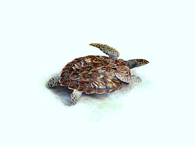 Photograph - Sea Turtle IIi by Ann Powell