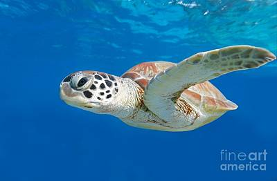 Photograph - Sea Turtle by Isabelle Kuehn
