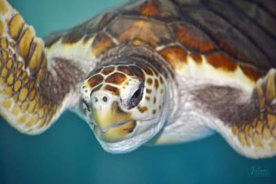 Photograph - Sea Turtle by Jody Lane