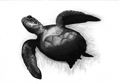 Drawing - Sea Turtle by Leara Nicole Morris-Clark