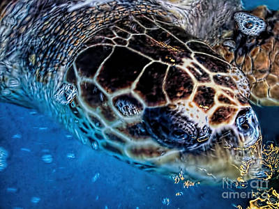 Photograph - Sea Turtle Portrait  by Olga Hamilton