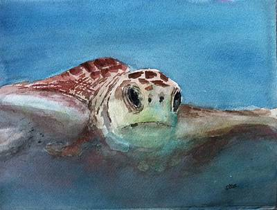 Painting - Sea Turtle  by Stephanie Sodel