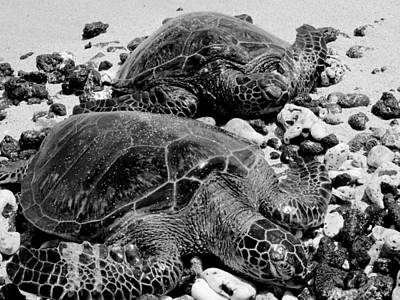 Photograph - Sea Turtles In Black And White by Nina Donner