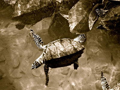 Photograph - Sea Turtles by Kim Pippinger