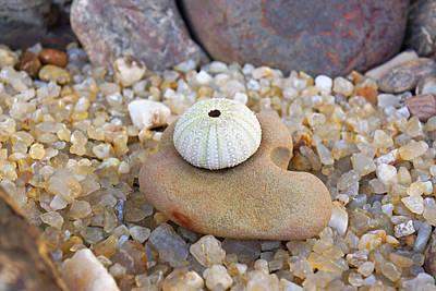 Keith Richards - Sea Urchin Art prints Coastal Beach Agates by Baslee Troutman