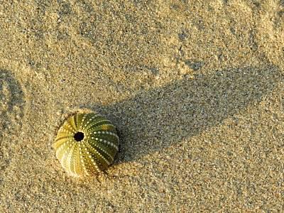 Shadow Photograph - Sea Urchin by Leana De Villiers