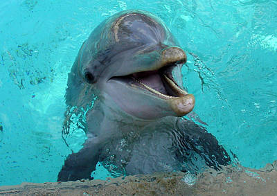 Art Print featuring the photograph Sea World Dolphin by David Nicholls