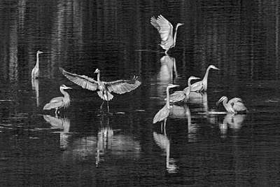 Photograph - Seabeck Herons by Wes and Dotty Weber