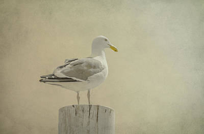 Kim Digital Art - Seabird by Kim Swanson