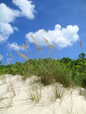 Seagrass And Sky Art Print by Randall Weidner