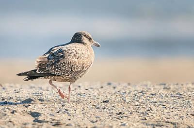 Seagull Photograph - Seagull - Beach - Bird by SharaLee Art