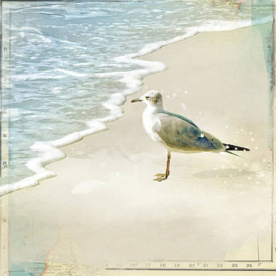 Photograph - Seagull 2 Plum Island by Karen Lynch