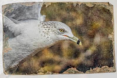 Digital Art - Seagull 3 by Ernie Echols