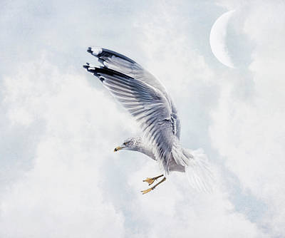 Photograph - Seagull Above Me by Pat Abbott