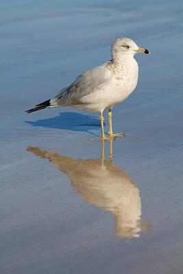 Seagull Art Print by Alicia Knust