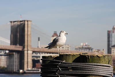 Photograph - Seagull And Brooklyn Bridge by Vadim Levin