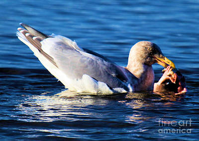 Photograph - Seagull And Salmon by Adam Jewell