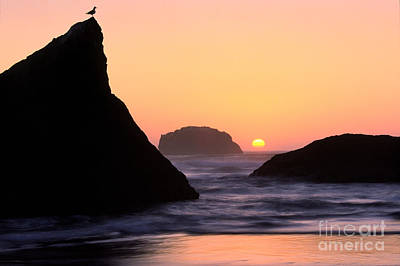 Photograph - Seagull And Sunset by Inge Johnsson