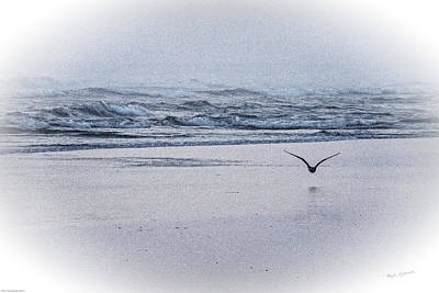 Photograph - Seagull And Surf by Mick Anderson
