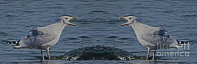 Photograph - Seagull Argument by Dawn Gari