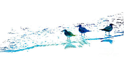 Seagull Art - On The Shore - By Sharon Cummings Art Print by Sharon Cummings