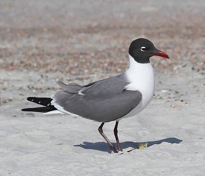 Sea Gull Photograph - Seagull At Jax 2 by Cathy Lindsey