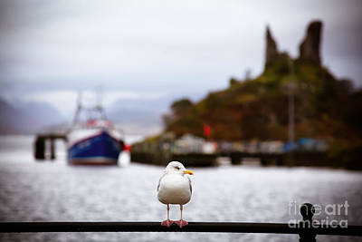 Boat Harbour Wall Art - Photograph - Seagull At Moil Castle by Jane Rix