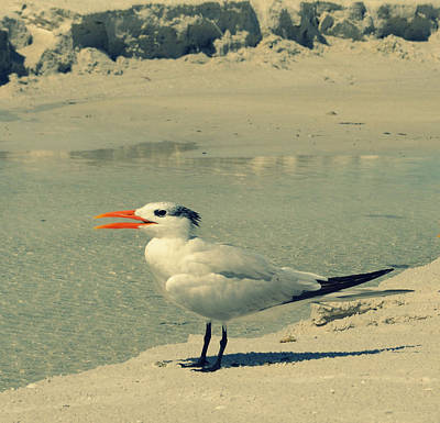 Photograph - Seagull At The Beach by Patricia Awapara