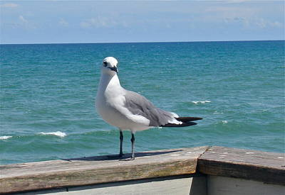Photograph - Seagull At The Ocean by Denise Mazzocco