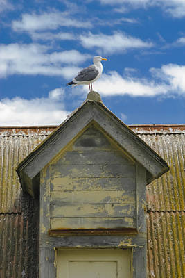 Photograph - Seagull Atop A Gable by Wes Jimerson