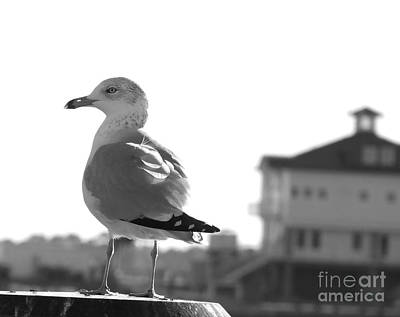 Photograph - Seagull Black White by Andrea Anderegg