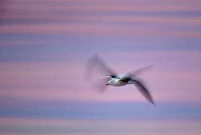 Photograph - Seagull Blur C6j1958 by David Orias