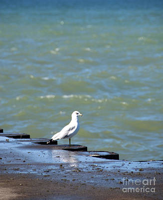 Photograph - Seagull Boat Dock by Jackie Farnsworth